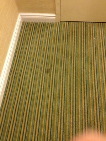 Ramada Plaza Holtsville Long Island: Stain on the floor