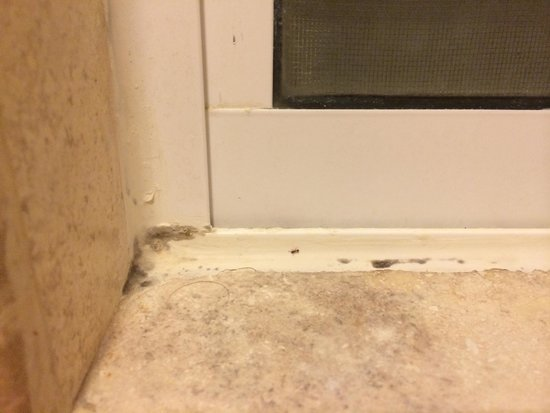 Royal Hideaway Playacar : Mold/mildew in the window grout