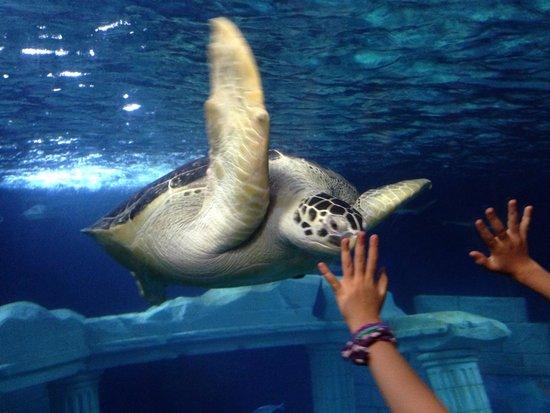 SEA LIFE Porto : Linda tartaruga marinha