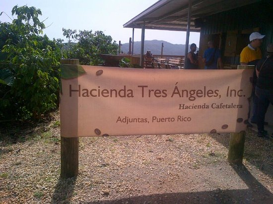 Adjuntas, Puerto Rico: Beneficiario de Cafe