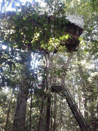 La casa en el rbol picture of reserva natural tanimboca - Casas en el arbol ...