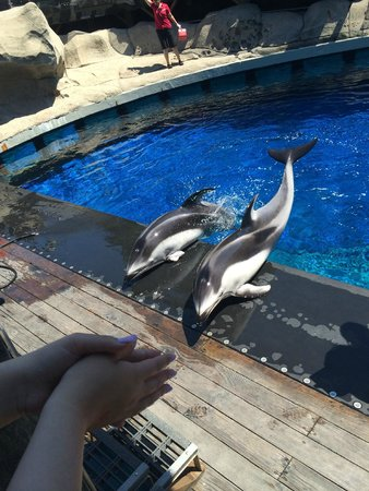 Vancouver Aquarium: Beautiful dolphins performing