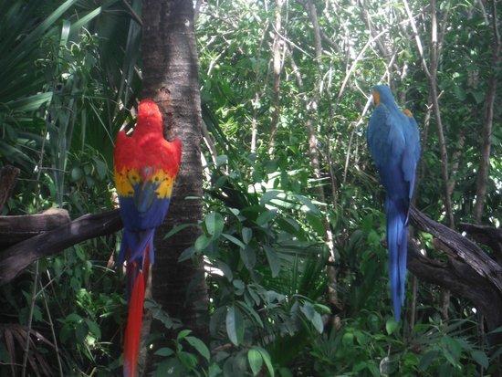 Parc Xel-Ha : parrots