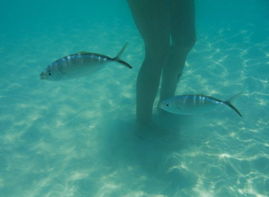 "Club Med Turkoise, Turks & Caicos : ""Do these legs make my fish look big?"""