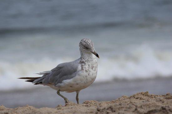 Seven Presidents Oceanfront Park: beach bird