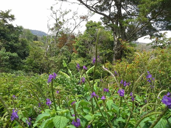 Cala Lodge: butterfly bush
