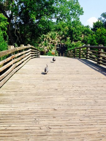 Audubon Zoo : Bridge