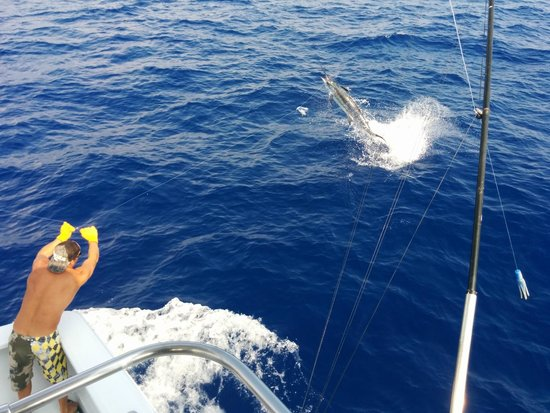 Hooked Up Sportfishing: Blue Marlin getting some air