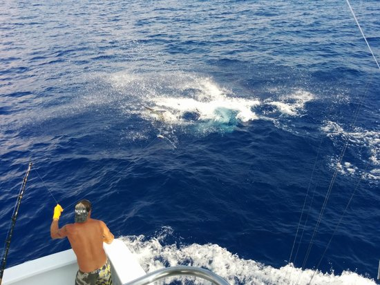 Hooked Up Sportfishing: Blue Marlin thrashing hard