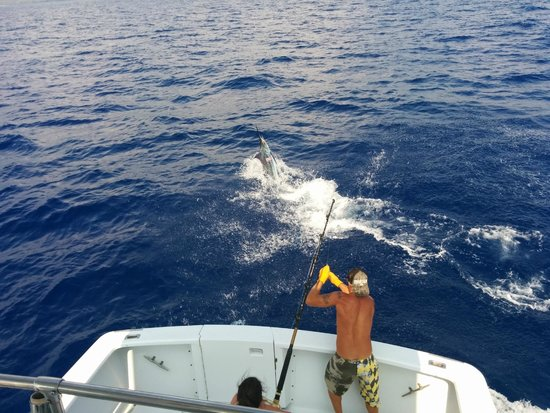 Hooked Up Sportfishing: Blue Marlin getting ready for flight