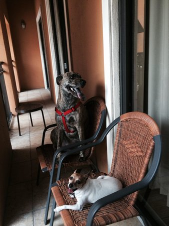 Residence Inn Delray Beach : Doggies Livin' it Up