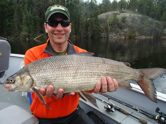 Aikens Lake Wilderness Lodge: Trophy Whitefish!