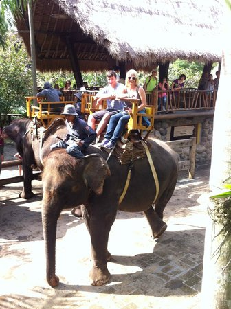 Bali Zoo : Elephant riding