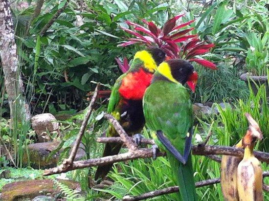 Bali Zoo : parrots