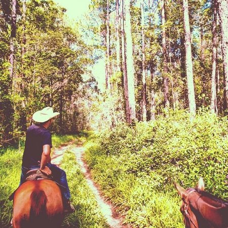 Tewantin, Australia: Trail riding in the Noosa hinterland