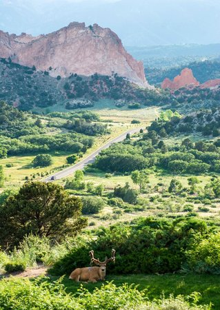 Garden of the Gods Club and Resort: The view from the balcony