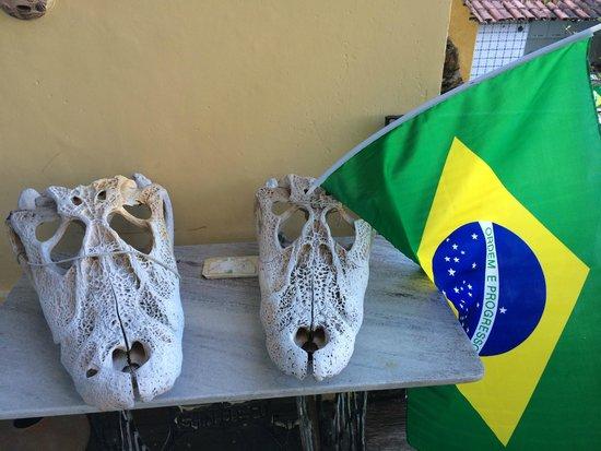Chez les Rois : Alligator Skulls