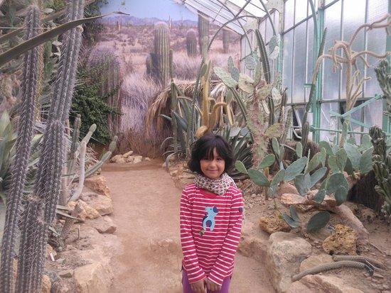 Parc de la Tête d'Or : serra cactus