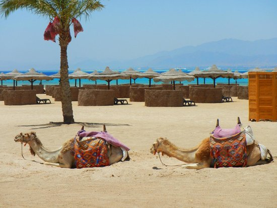Kempinski Hotel Soma Bay: The private beach on our doorstep