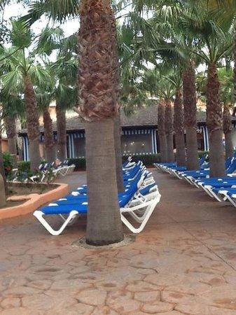 Diverhotel Roquetas: zona de hamacas antes de empezar el dia, todas colocadas y limpio