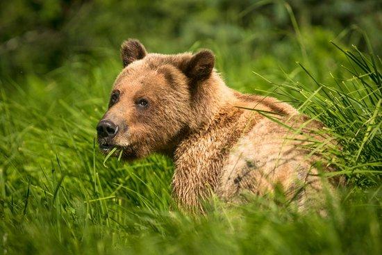Spirit Bear Lodge: Sedge Grass Salad