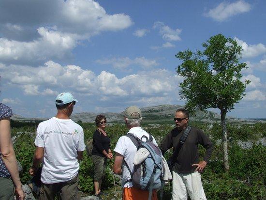Heart of Burren Walks: Tony Kirby in full flow