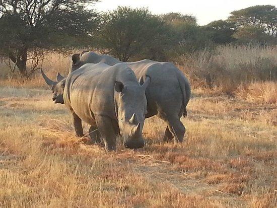 Mabula Game Lodge : Rhino's