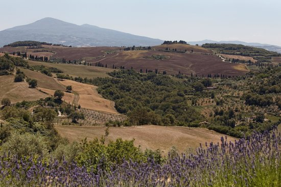 Terre di Nano: Lavender and the spectacular views