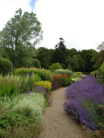 Leith Hall, Garden and Estate : Catmint Border
