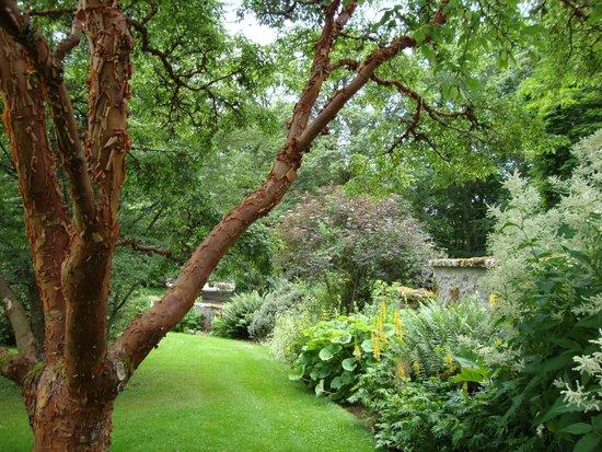 Leith Hall, Garden and Estate : Paperbark maple and shrub border