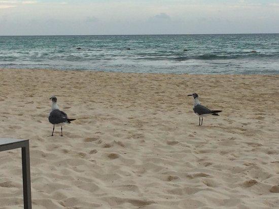 Paradisus Playa Del Carmen La Esmeralda: Triste