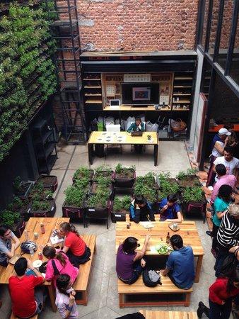Terraza Del Mercado Roma Foto Mercado Roma Mexico City