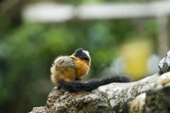 Yachana Lodge: Wildlife around the lodge