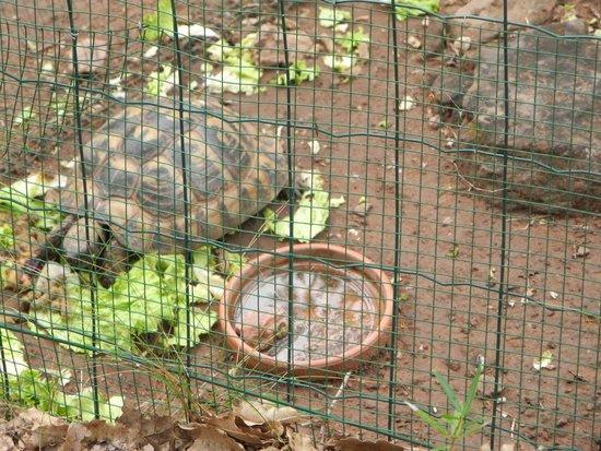Le village des Tortues : Черепахи