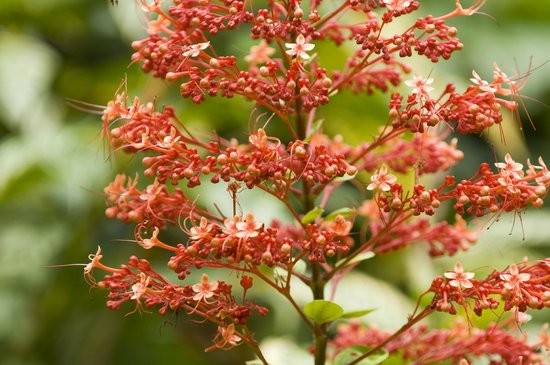 Yachana Lodge: One of the several exotic flowers around the grounds of the lodge