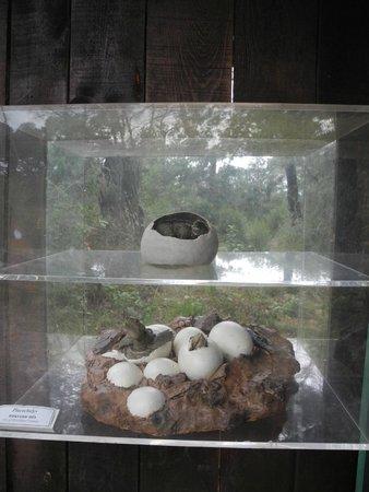 Le village des Tortues : Черепаховые яйца