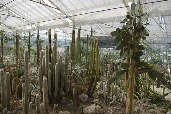 Botanical Garden of Cacti and Succulent Plants 'Mora i Bravard' of Casarabonela: Vista del invernadero