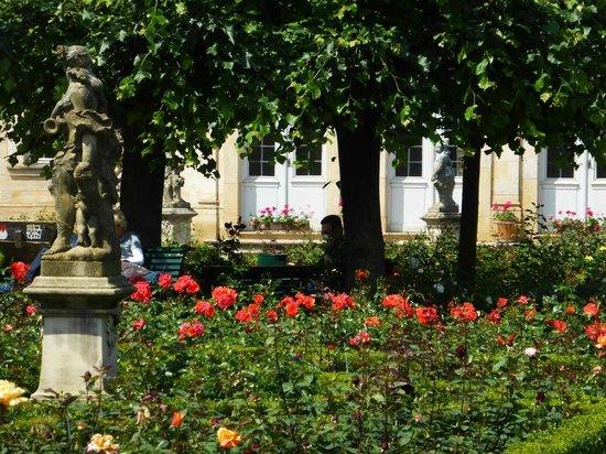 Rosengarten der Neuen Residenz: In voller Blüte 3