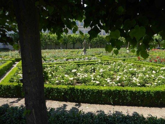 Rosengarten der Neuen Residenz: In voller Blüte 1