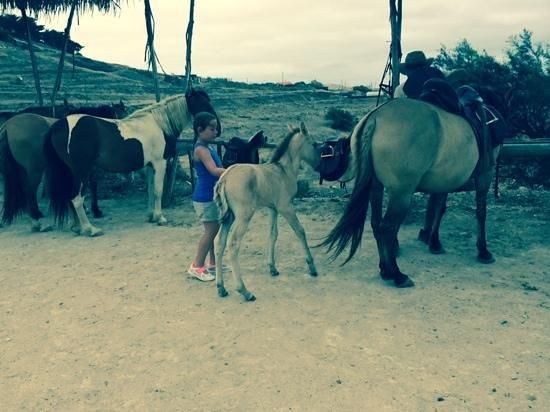 Pestana Porto Santo All Inclusive : Great pony trekking trip with two week old foul!