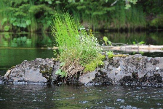 Ruskeala Waterfalls: 2014гИюль
