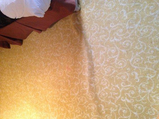 Clayton Lodge Hotel: Carpet