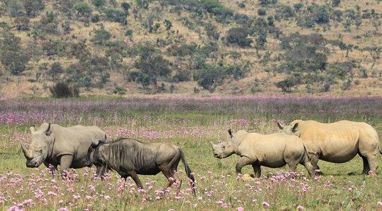 Kololo Game Reserve: @ Welgevonden