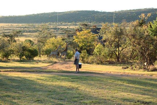 Kololo Game Reserve: @ Kololo; Giraffes!