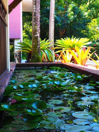 Freestyle Resort Port Douglas: Lily Ponds around the Pool and Grounds