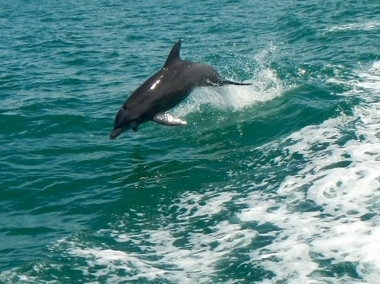 Little Toot Dolphin Adventures: loved seeing these beautiful dolphins