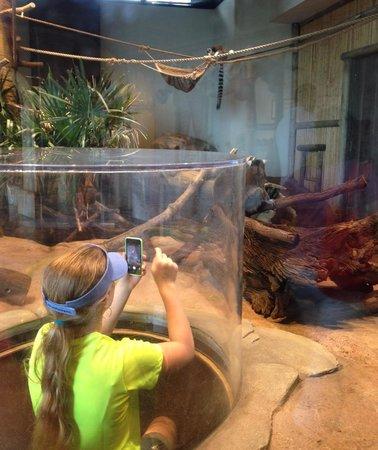 South Carolina Aquarium : Photographing the lemurs up close