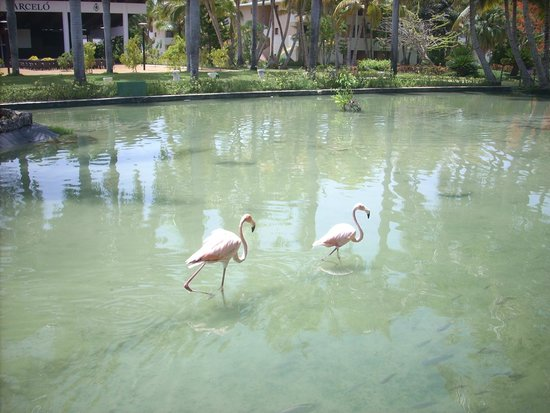 Catalonia Bavaro Beach, Casino & Golf Resort : le jardin