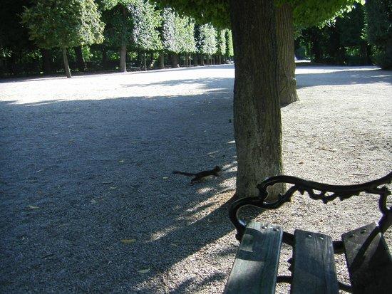 Schonbrunner Gardens: Тишина!