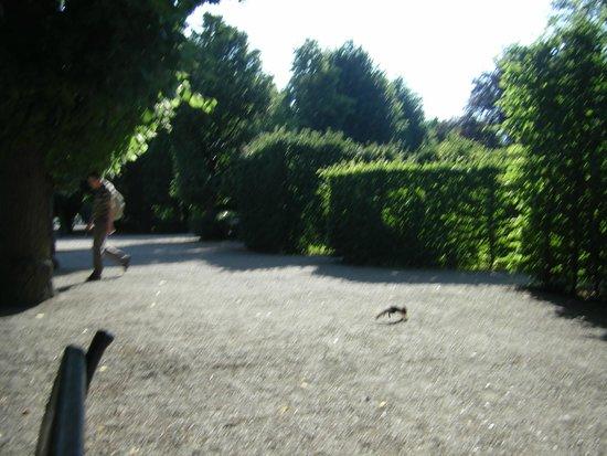 Schonbrunner Gardens: Белочка